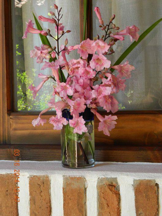 Flores del jardín - La Mirage Parador