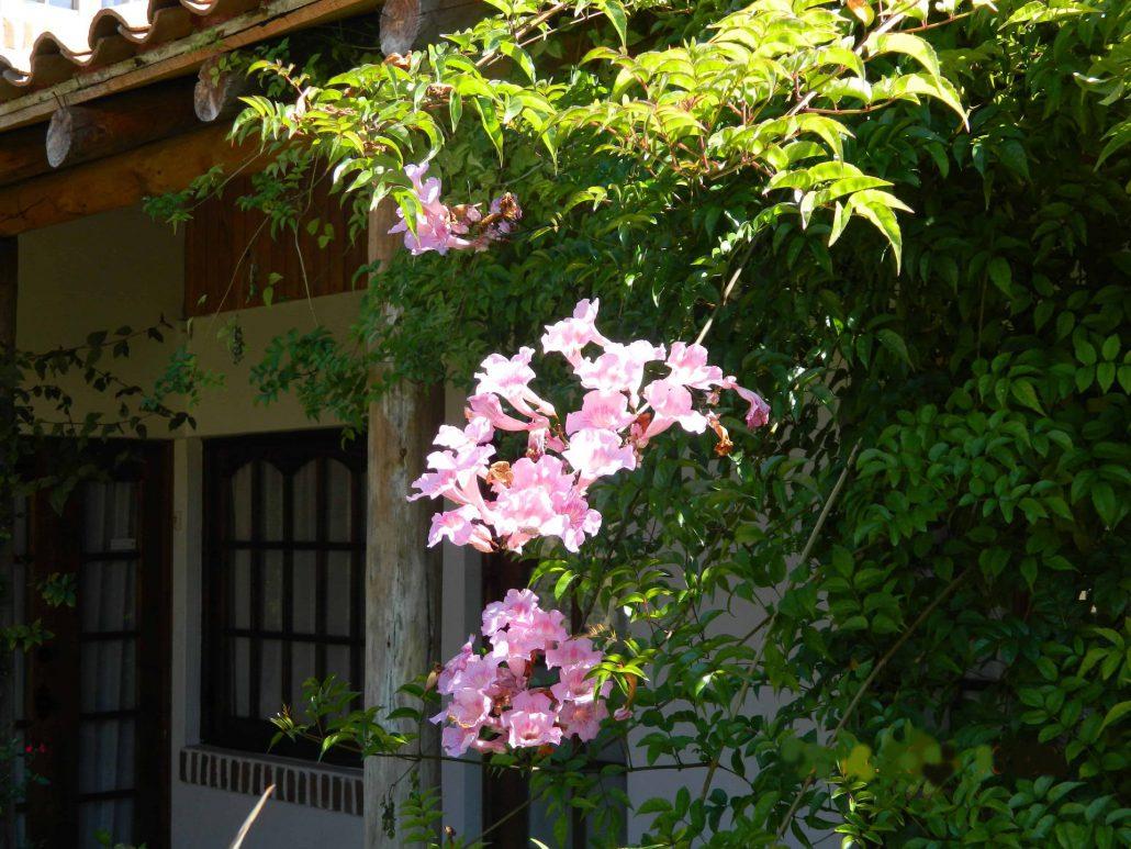 Flores en el patio - La Mirage Parador