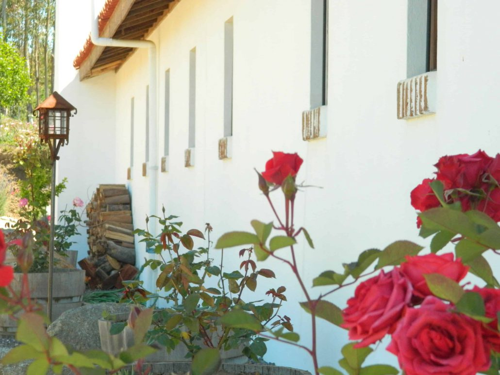 Roses on east facade - La Mirage Parador