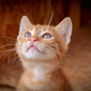 testimonial woman (cat)
